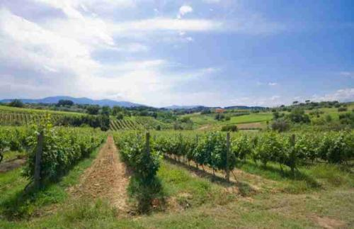 Degustazione Vino, Olio e Piatti Toscani a Montecarlo